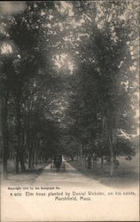 Elm Trees Planted by Daniel Webster, On His Estate Postcard