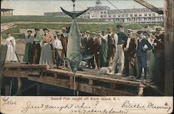 Sword Fish Caught off Block Island