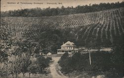Section of Tonoloway Orchard