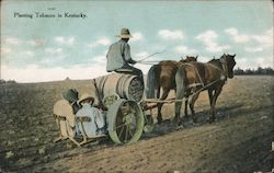 Planting Tobacco in Kentucky Postcard