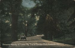 Driveway, Showing the Famous Big Tree in Cherokee Park