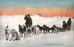 Howling Dog Team Postcard