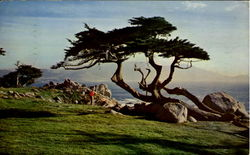 Cypress And Sea