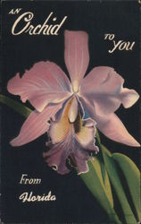 At Orchid to you From Florida Postcard