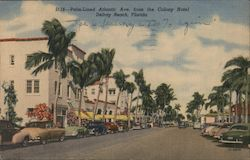 Palm-Lined Atlantic Avenue from Colony Hotel Postcard