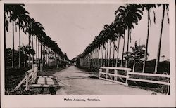 Palm Avenue, Houston Sugar Plantation