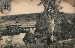A Typical Bush Scene, Egmont Bridge and Meander River Postcard