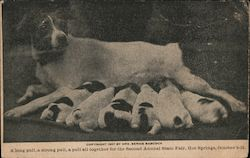 Litter of Puppies and Mom, Arkansas State Fair