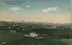 Bird's Eye View of Whittier, Cal, Showing Orange Groves