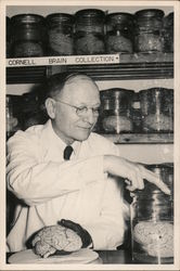 Cornell University Brain Collection 1950