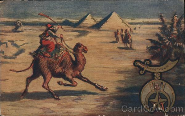 A Man Riding a Camel Camels