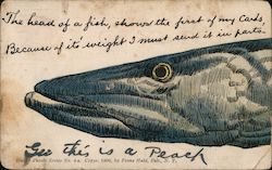 The head of a fish, shows the first of my cards. Because of it's weight I must send it in parts. Postcard