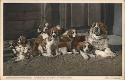 Family of St. Bernhards