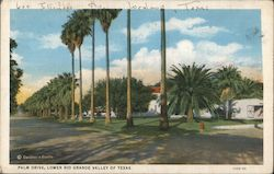 Palm Drive, Lower Rio Grande Valley of Texas Postcard