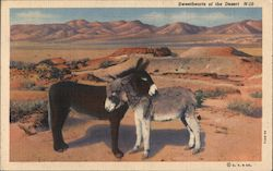 Sweethearts of the Desert N-10: Two Donkeys in the Desert