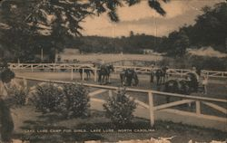 Camp For Girls - Horses Postcard