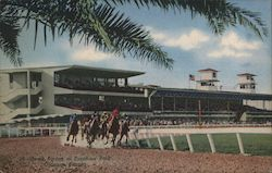 Horse Racing at Sunshine Park