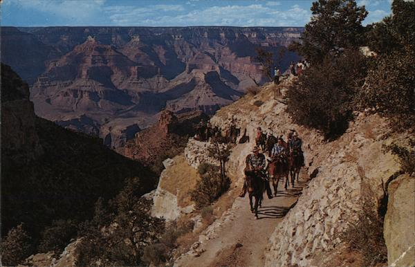 The Daily Mule Train Grand Canyon National Park Arizona