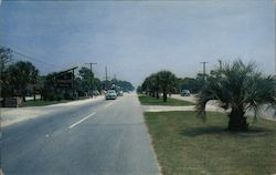 Palms Line the King's Highway in Postcard