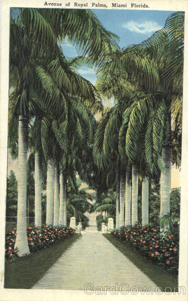 Avenue of Royal Palms Miami Florida
