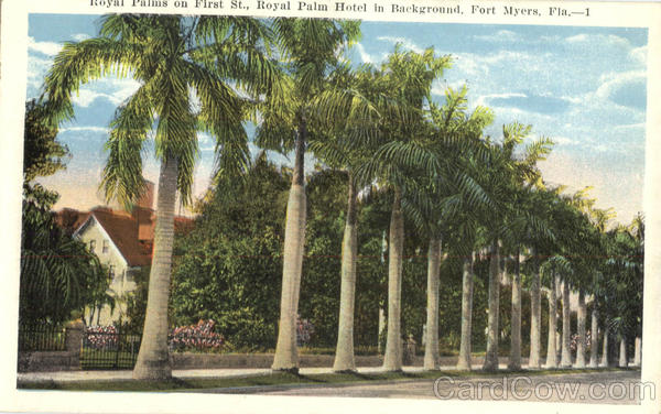 Royal Palms on First St., Royal Palm Hotel in Background Fort Myers Florida