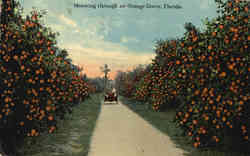 Motoring through an Orange Grove