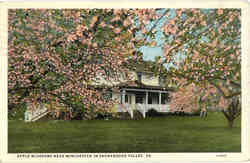 Apple Blossoms Near Winchester in Shenandoah Valley Postcard