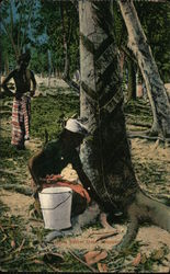 Tapping Rubber Trees
