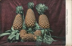 Well-Grown Pineapples
