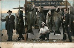 The Worlds Record, 4 Hours Catch, July 30th 1904