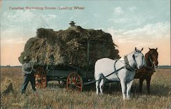 Canadian Harvesting Scenes:Loading Wheat