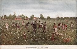 An Arkansas Cotton Field