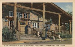Native Deer on Steps of Bright Angel Lodge Postcard