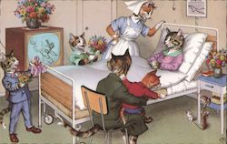 Visiting Cats in Hospital