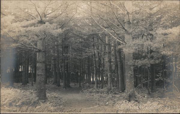 Deer Park Woods Woodstock New Hampshire