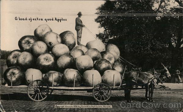 A Load of Extra Good Apples Canada Exaggeration