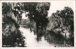 The Suwannee River - From Bridge on U.S. 41 Postcard