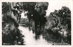 The Suwannee River from Bridge on U.S. 41 Postcard