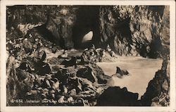 Interior Sea Lion Caves Postcard