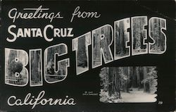 Greetings from Santa Cruz, California - BIG TREES