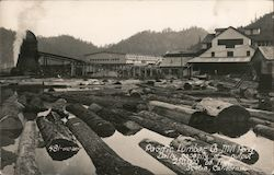 Pacific Lumber Co Mill Pond, Daily Capacity of Output 250,000 Bd. Feet