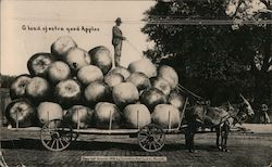 A Load of Extra Good Apples Postcard