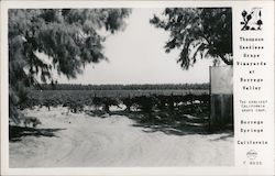 Thompson Seedless Grape Vineyards at Borrego Valley - The Earliest California Grape Crop Postcard