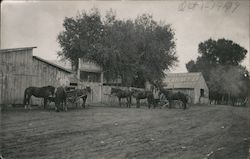 "Horses Outside Livery Stable ""W. G. Davis"" Livery-Stables Postcard"