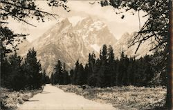 Grand Teton From the Highway Through the National Park Postcard