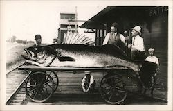 Giant fish on a wagon Postcard