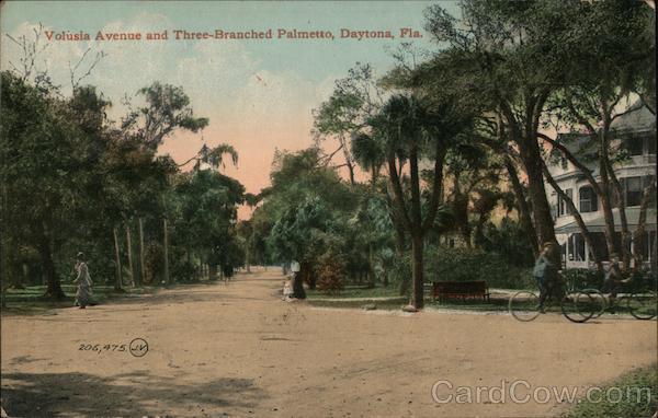 Volusia Avenue and Three-Branched Palmetto Daytona Beach Florida