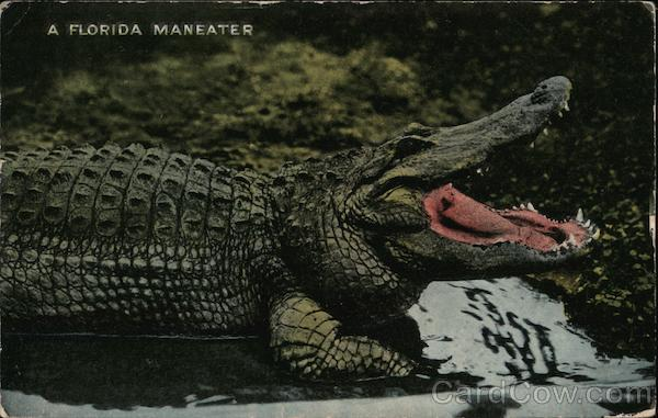A Florida Maneater - Osky's Alligator Store Jacksonville