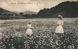 Among the Daisies Postcard