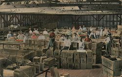 Interior of Citrus Exchange, Packing House Postcard